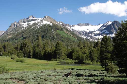 photo of the Emigrant Wilderness